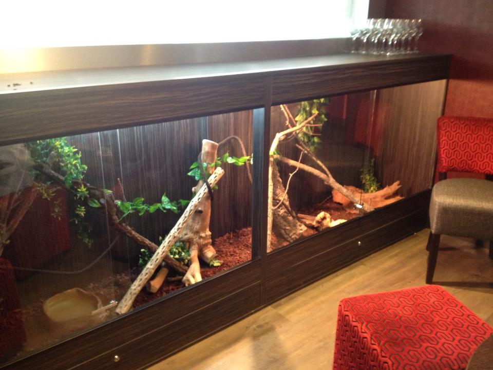 10x4.5x2ft Water Dragon Tank